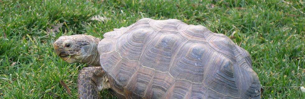 tortoise vet near me