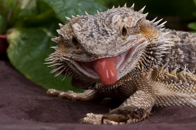 27 Common Care Mistakes of Exotic animals [LI Vet Shares