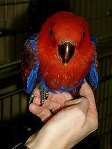 parrot vet near me
