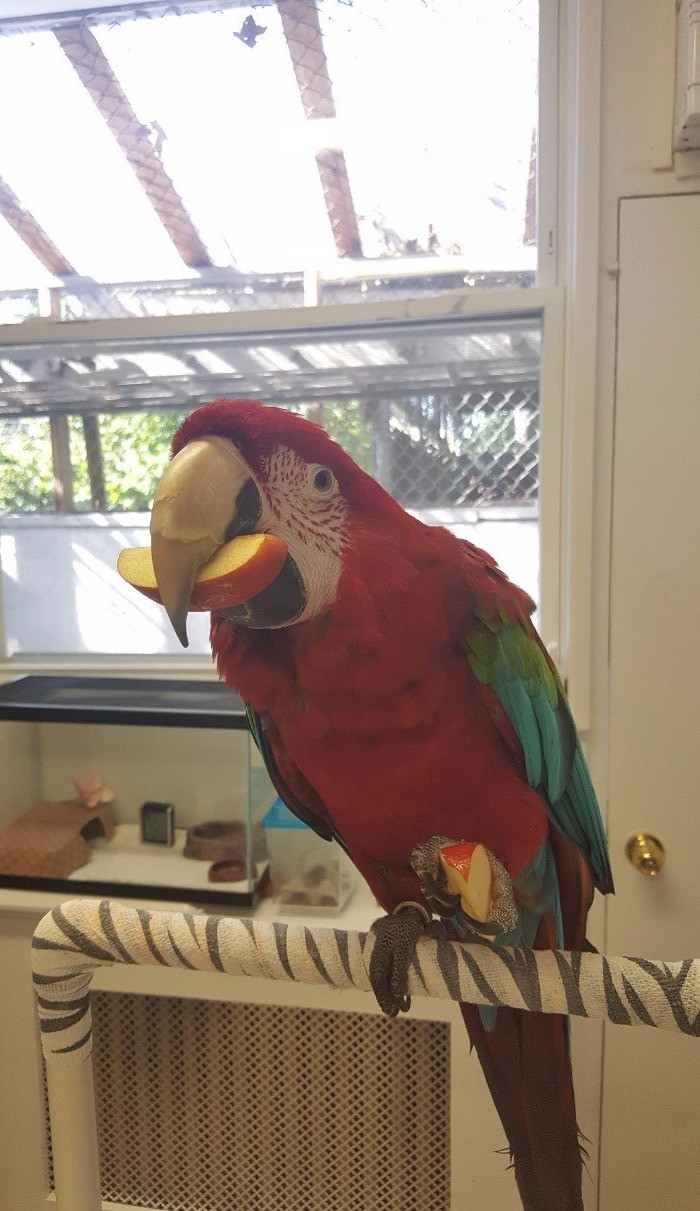 pet parrot | Bird and Exotic Pet Vet | Long Island