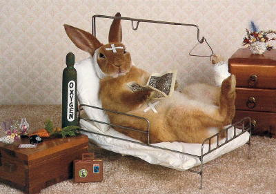 Sick Rabbit needing care | LIBEVC