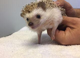 hedgehog vet near me