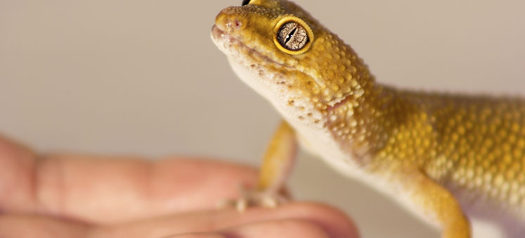 easy reptiles to take care of