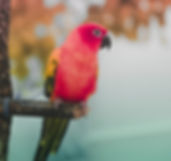 exotic-bird.jpg