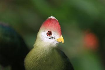 bird vet near me