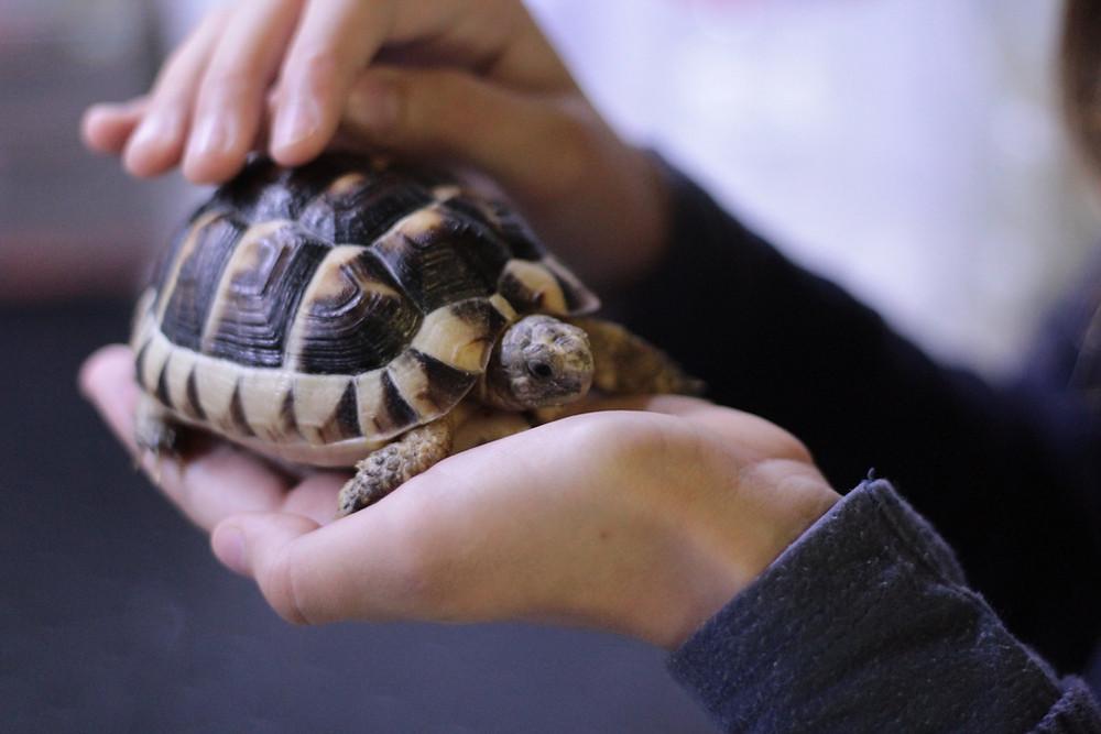 Pet tortoise | Reptile vet and exotic pet vet | Long Island