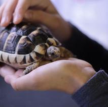tortoise spay and neuter at exotic vet new york