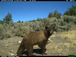 Bear Image