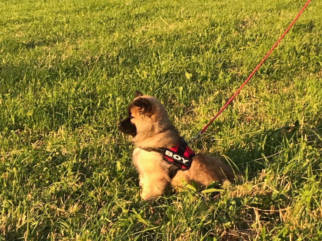 Ayko geniesst den Sonnenunterganges