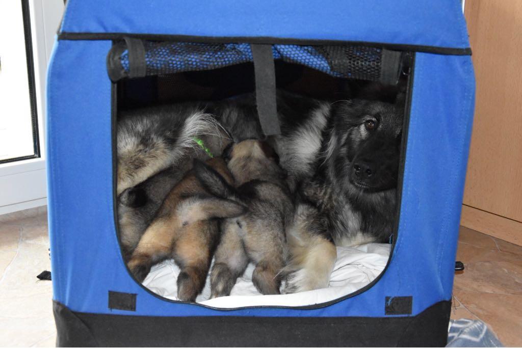 Die ganze Familie in einer selbst ausgewählten Hundebox