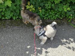 Auch Katzen werden von uns Welpen akzeptiert (Woche 6)