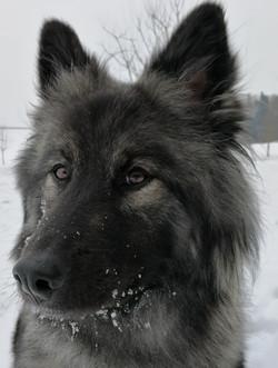 Ishani im Schnee