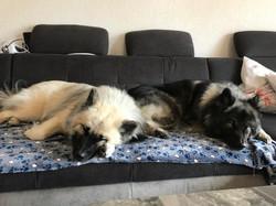 Alasca mit Mutter auf dem Sofa 25.5.19