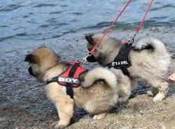 Ayko und Alasca sehen gewundrig den Wellen vom Hallwilersee zu