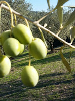 Green olives.