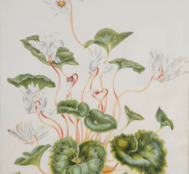 Ah, Those Pretty, Pretty, Flowers! And She Knew Her Science too – Maria Sybilla Merian at KSK Berlin