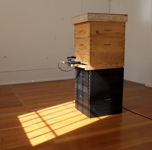 Céleste Boursier-Mougenot relais, 2012 Installation en 2 parties : 2de partie ruche peuplée, microphone. Photographie : Frédéric lanternier © Céleste Boursier-Mougenot. Courtesy galerie Xippas.