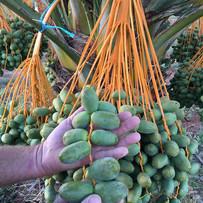 Australian Organic Dates