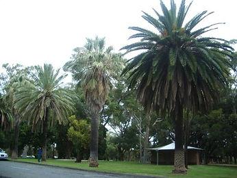 Identifying Palm Trees