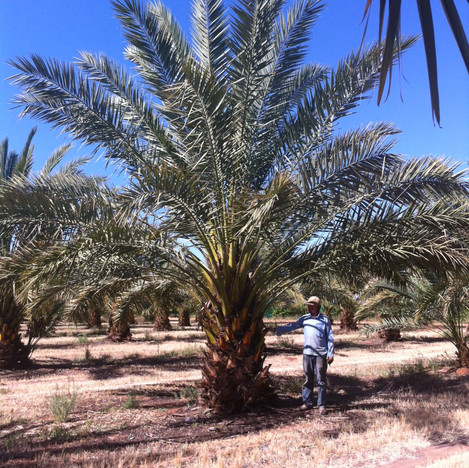 Dave under Date Palm