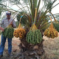 Dave with Date Palm
