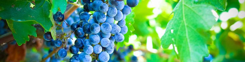 Gurra Downs Vineyards