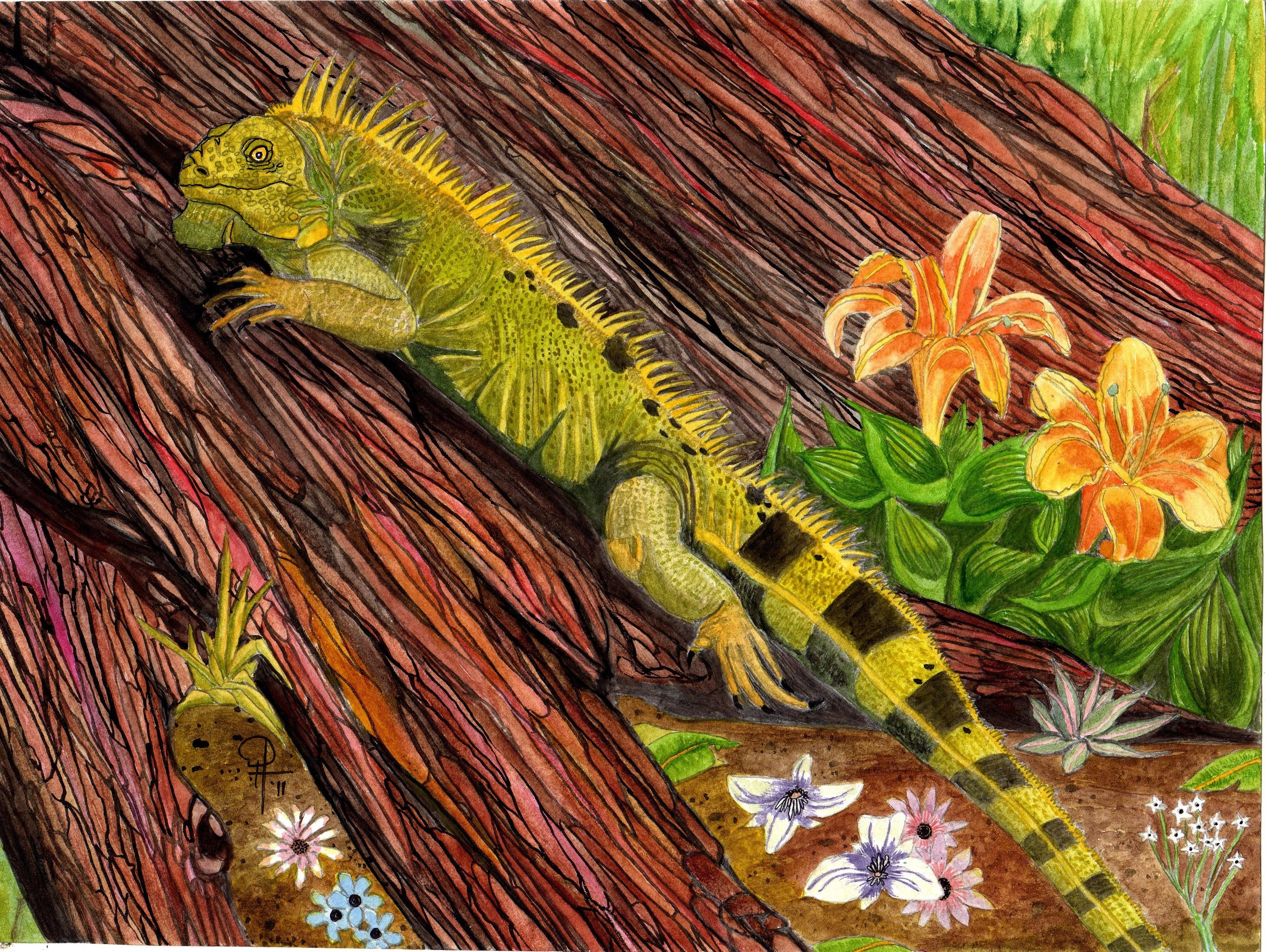 IguanaGreen7063.jpg