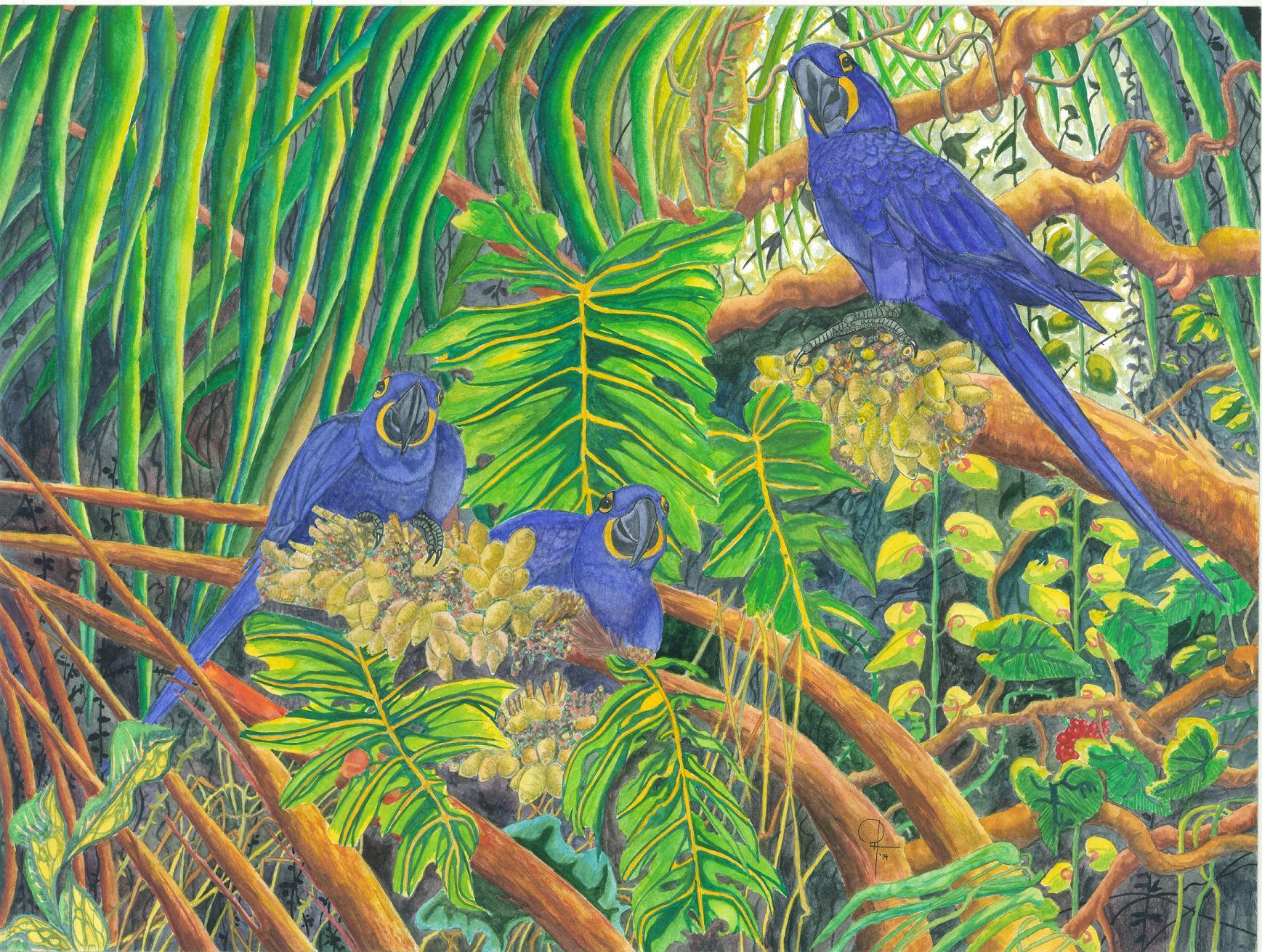 macawh2.jpg
