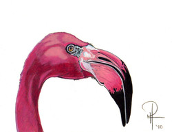 FlamingoPink2.jpg
