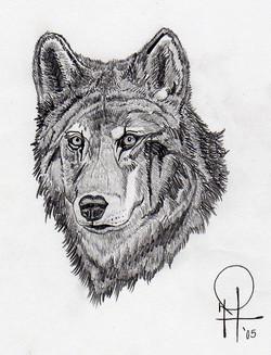 WOLF1030.jpg