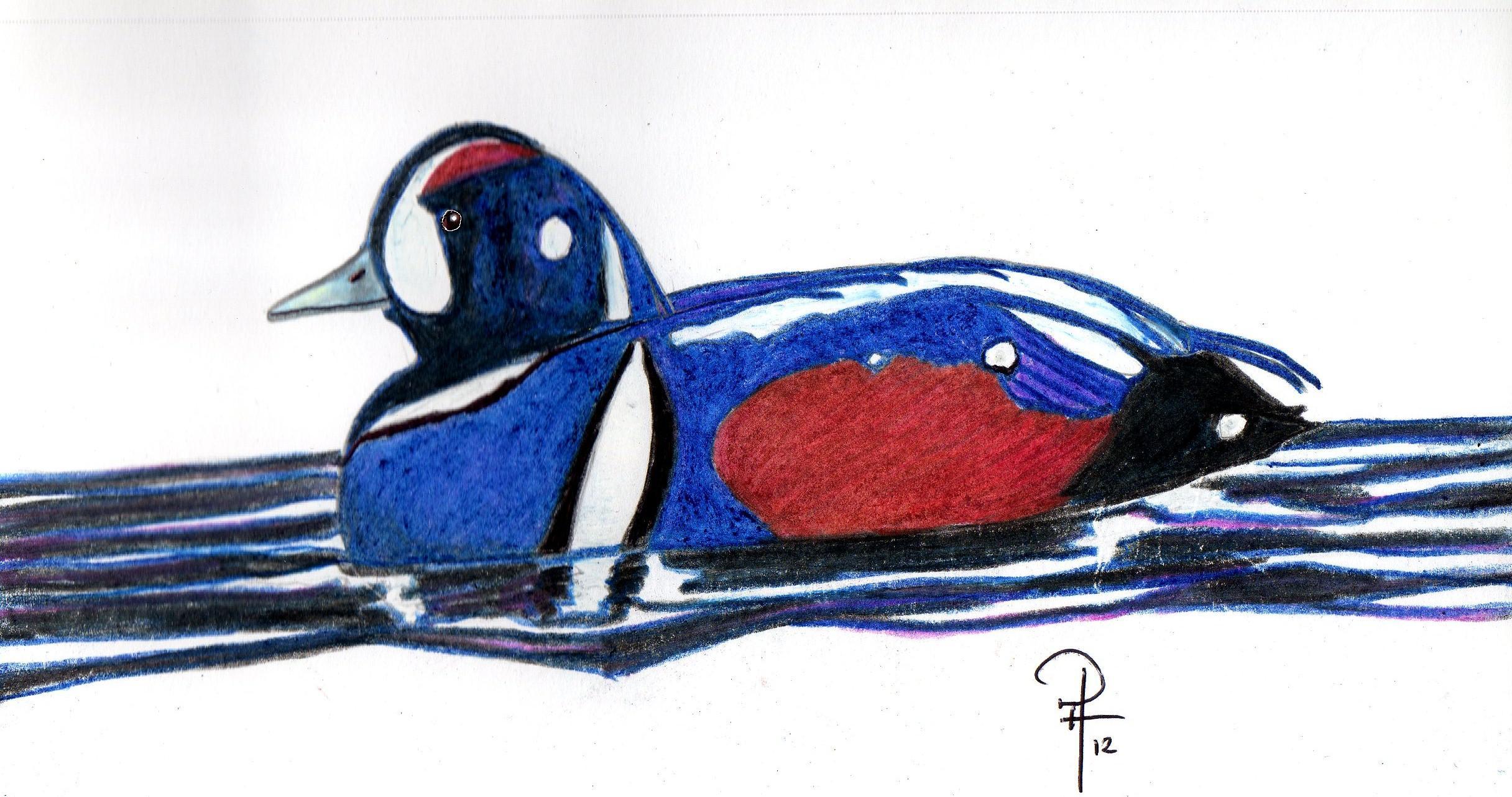 DuckHarly528.jpg