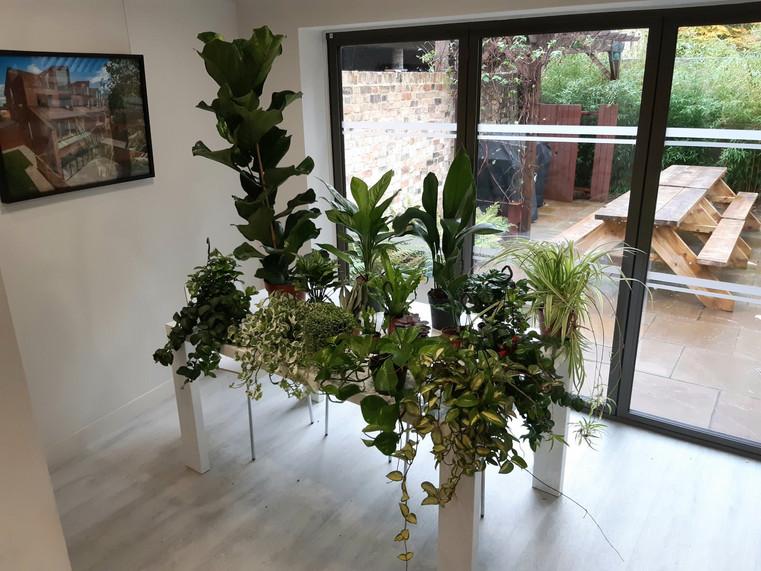 Plants.jfif