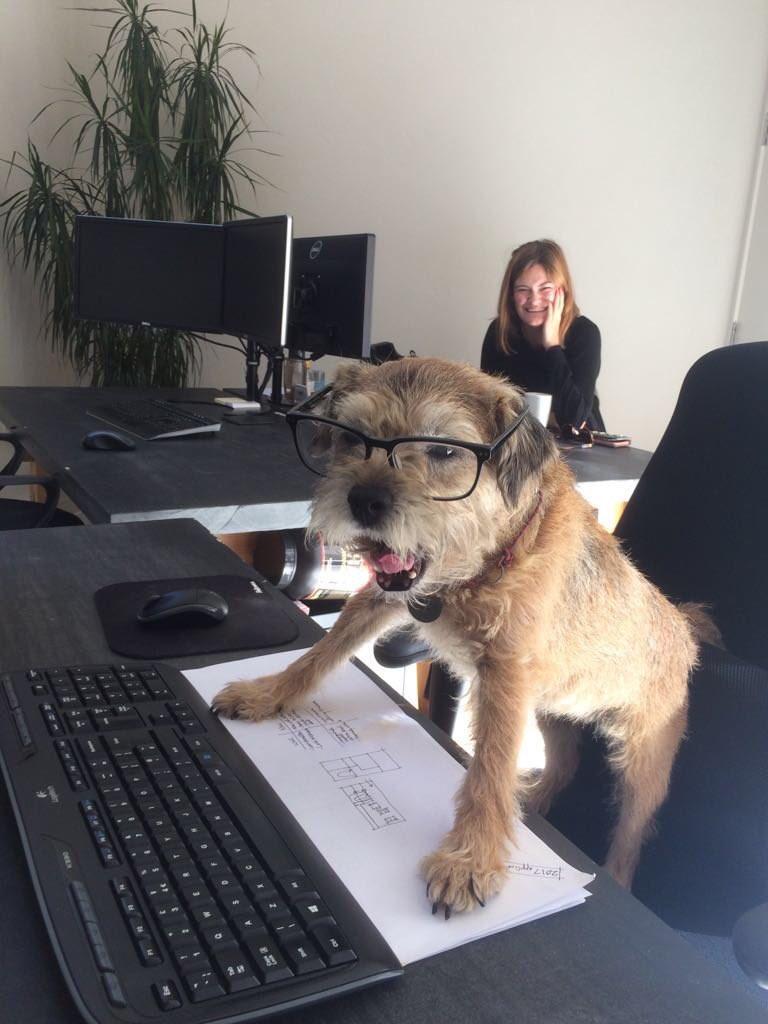 Office Dog.jfif