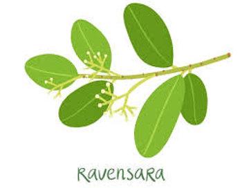 Ravensara Anisata oil, Madagscar