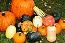 Harvest EO Blend