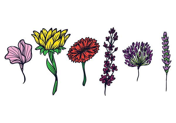 vector-flower-illustration-set.jpg