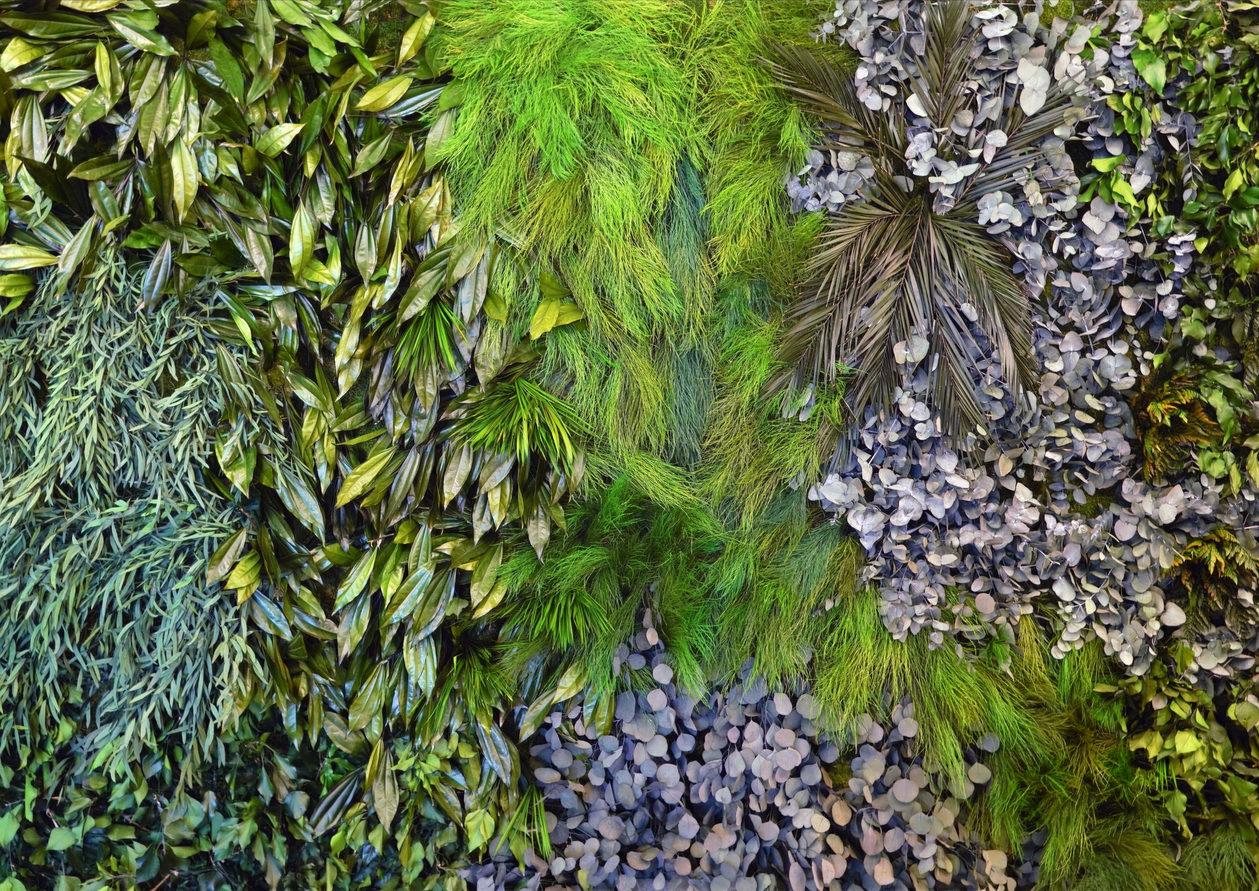 pflanzenwand_edited.jpg