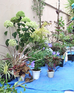 植栽工事・低木と下草