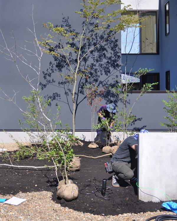 植栽レイアウト&植え付け