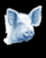 Pig drawing.png