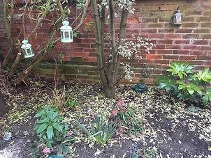 Small Urban Garden