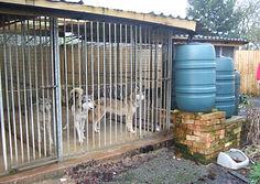 unlicensed breeding Tamaskan dogs Blustag lawsuit