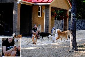 Right Puppy Kennel Blustag Tamaskan Yadkin Wolf Den My Shiba Loving Pup Resort and Spa fake scam mill kennels