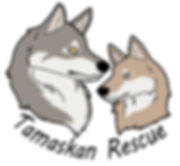Tamaskan dog rescue adoption puppy puppies