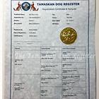 official Tamaskan document papers registry dog register TDR pedigree
