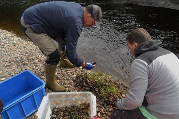 fiske fiskevård fiskevårdsförening viksjö mjällån
