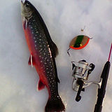 röding regnbåge fiske isfiske lalamp pörjalamp utsättning
