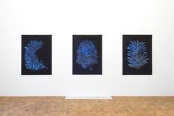 Lilies of the Field, Dvir Gallery