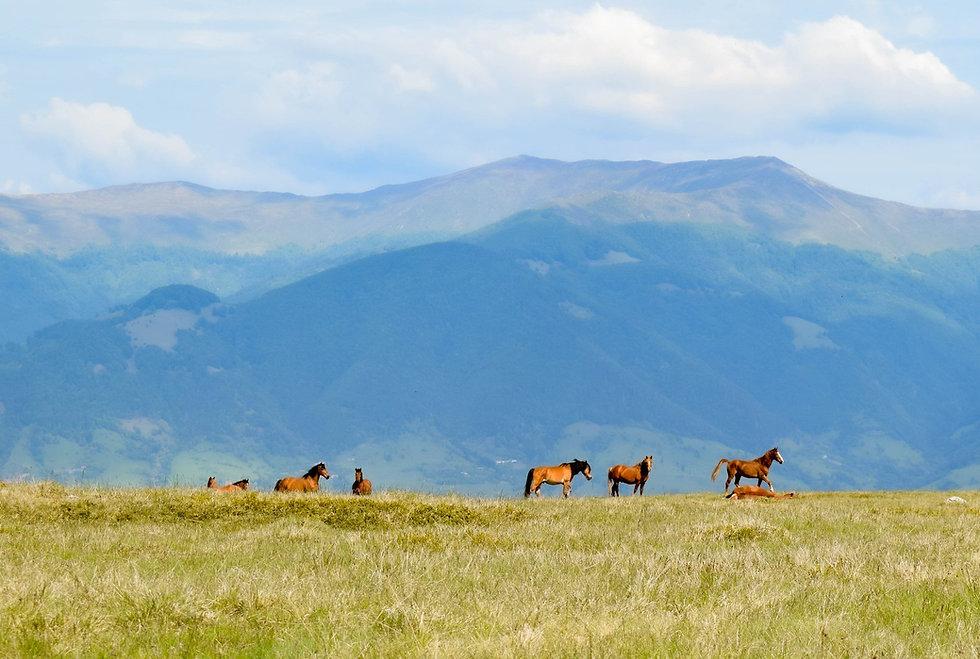 Pferde HS.jpg