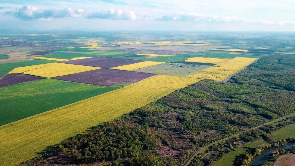 Banater Heide